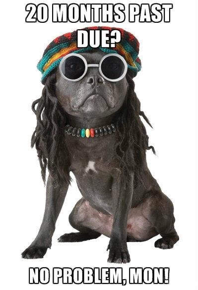loan-mod-no-problem-dog
